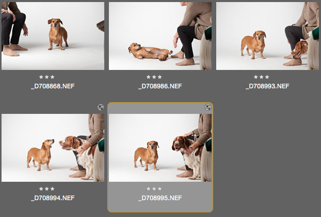 dog photography in Kingston upon Thames, Surrey