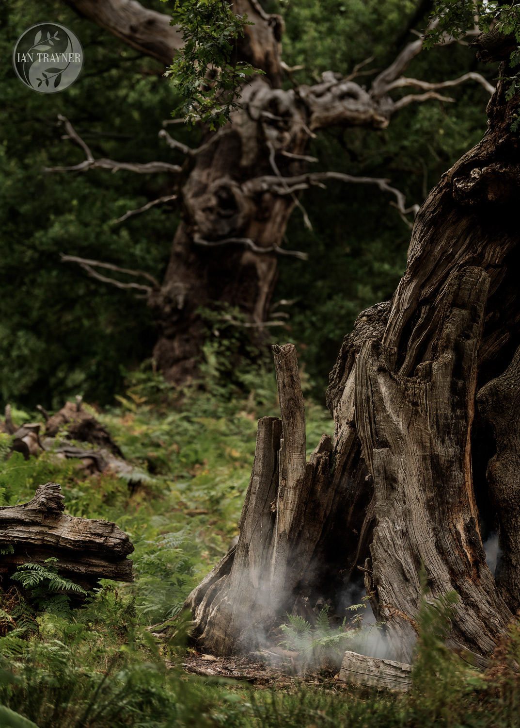 In the forest at dusk, mist or smoke rises from the base of a hollow tree