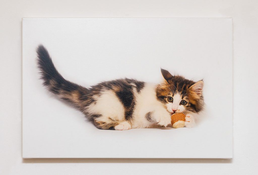 canvas with photograph of a kitten